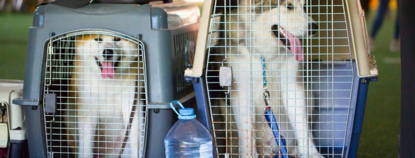 deux husky dans leur cage transport